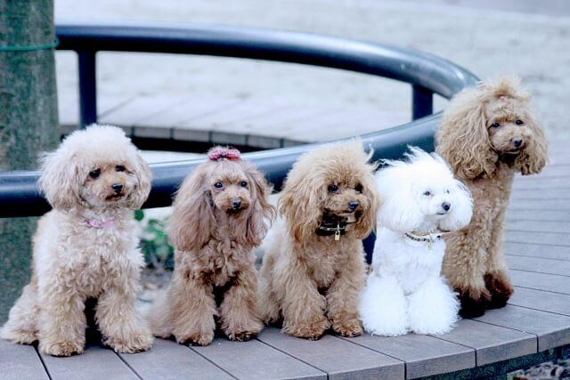 犬と一緒に遊べる場所やカフェ、イベント情報など、犬に関わるエンタメ情報を発信してまいります。 犬と一緒