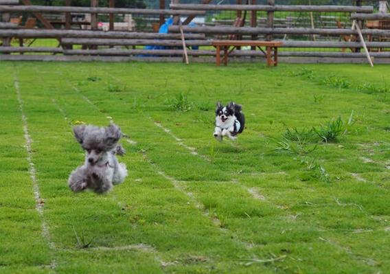 犬と一緒に遊びにいける場所や、カフェなど飼い主様にお得情報を発信。 犬と一緒