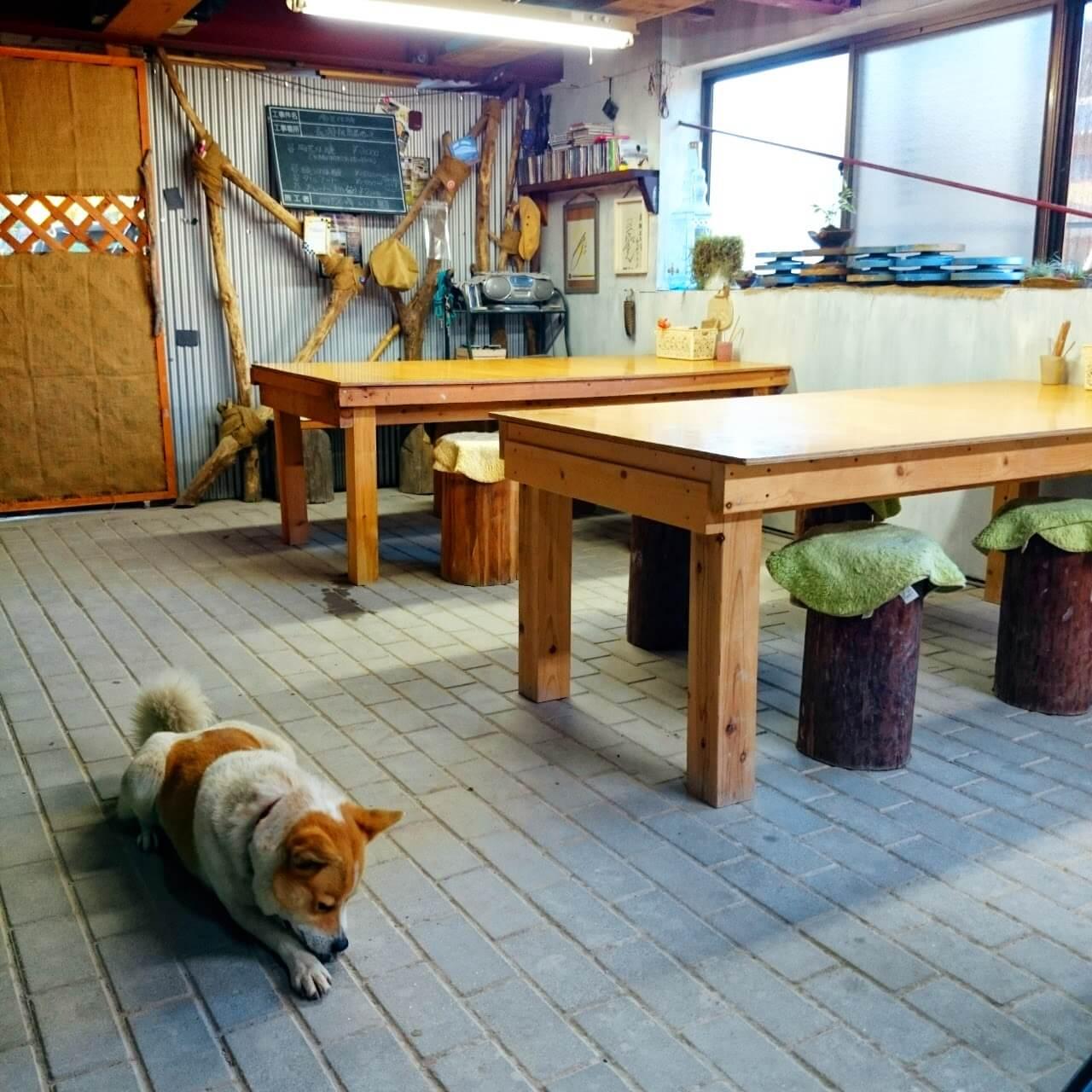 犬と一緒に入れる陶芸教室