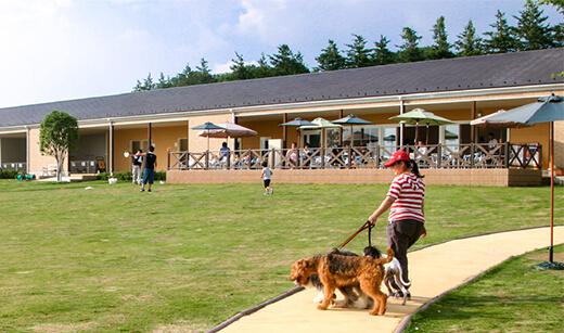 犬と一緒 世界の名犬牧場