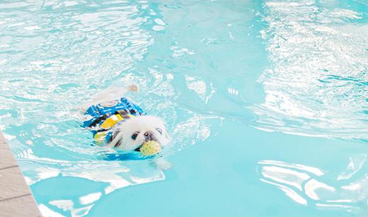 犬のプール 大江戸温泉物語別館 綱吉の湯