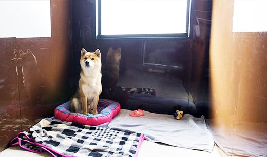 犬のホテル 綱吉の湯