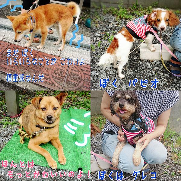埼玉 保護 会 犬 譲渡