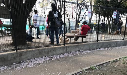 落合南公園 犬広場(ドッグラン)